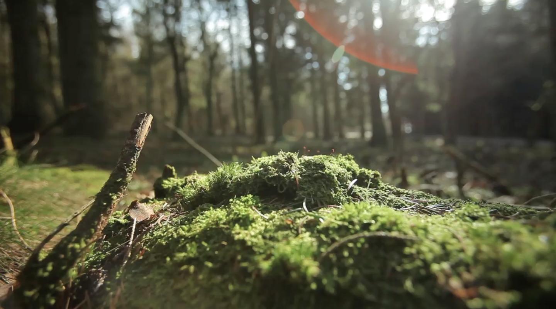 koda-forest